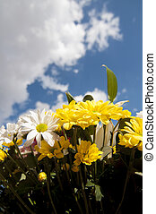 bunch, field of flowers in spring with cloudy sky background
