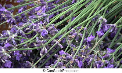 Bunch fresh lavender flowers in wicker basket on old  garden table