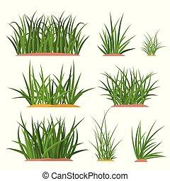bunch green grass set