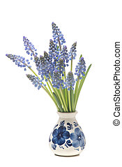 Bunch of a grape hyacinths in a delfts blue vase isolated on a white background