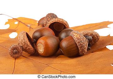 Bunch of acorns