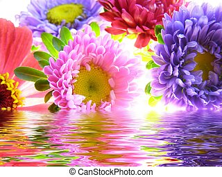 bunch of asters reflected in water - Close-up of colourful ...