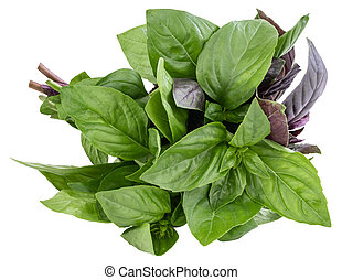 bunch of basil isolated on white background