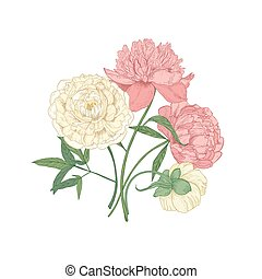 Bunch of beautiful blooming peony flowers hand drawn on white background. Detailed botanical drawing of gorgeous flowering romantic garden plants. Vector illustration in elegant antique style.