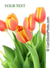 Bunch of beautiful tulips