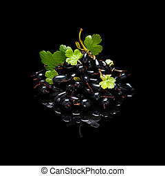 Bunch of black currant berries isolated on black