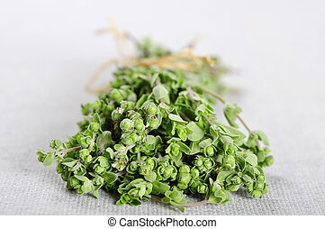 Bunch of blooming marjoram herb closeup on beige tablecloth