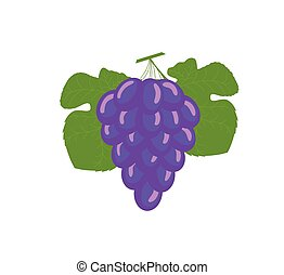 Bunch of Blue Grapes Vector