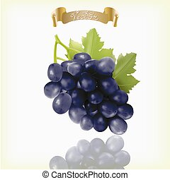 Bunch of blue, purple, black Isabella grapes with vine leaves isolated on white background. Realistic, fresh, natural food, dessert.