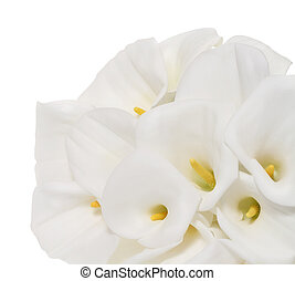 Bunch of Cala Lilies in high key. Isolated on white