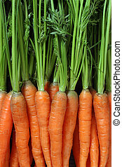 Bunch of carrots - Photo of a bunch of carrots as a ...