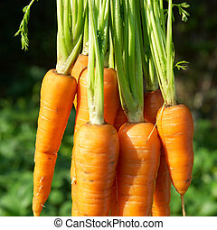 Bunch of carrots with green soft background