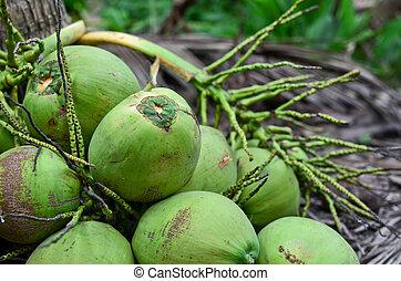 Bunch of coconut