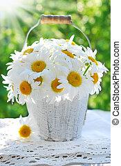 bunch of daisies in the garden