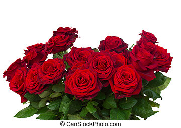 bunch of dark  red roses  close up