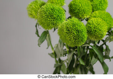 Bunch of dianthus barbatus in glass vase on gray background...