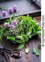 Bunch of different herbs for cooking