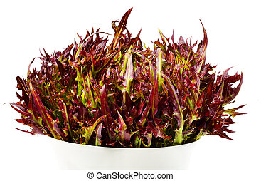 Bunch of different red and green curly lettuce