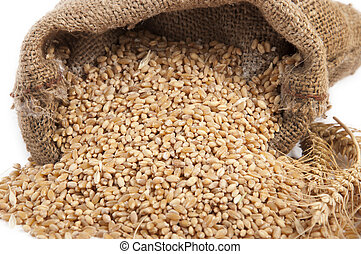 bunch of ears of wheat - sheaf of wheat dried with colored ...