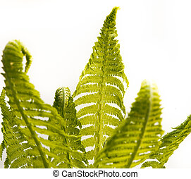 bunch of fern leafs