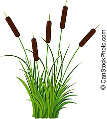 Bunch of five reed stems with leaves plant with grass vector isolated on white background