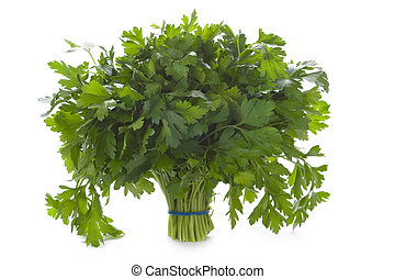 bunch of flat leaved parsley isolated on a white background...
