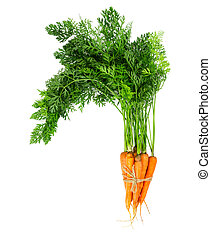 Bunch of fresh carrots isolated on white background.
