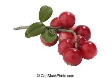 Bunch of fresh cranberries isolated on white background