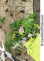 Bunch of fresh herbs and garden scissor on wooden background