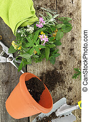 Bunch of fresh herbs and garden tools on wooden background