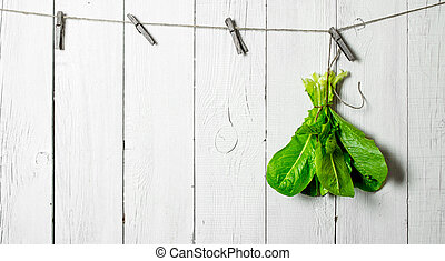 Bunch of fresh herbs on a string.