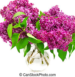 lilac flowers in glass vase close up isolated on white background