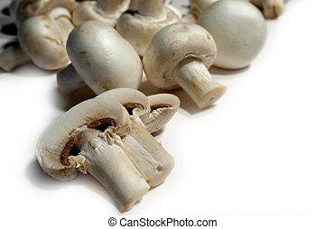 bunch of fresh mushroom