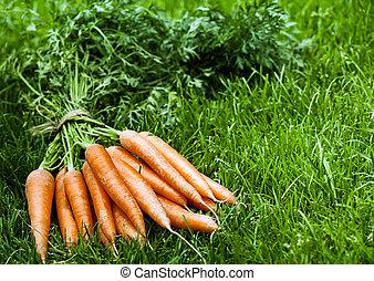Bunch of fresh orange carrots on green grass