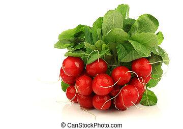 bunch of fresh radishes