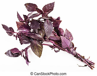 bunch of fresh red basil herb on white