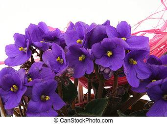 bunch of fresh viole
