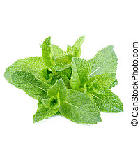 Peppermint - Bunch of Fresh Wet Peppermint Leaves isolated ...