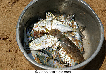 bunch of freshly caught fish in a basket