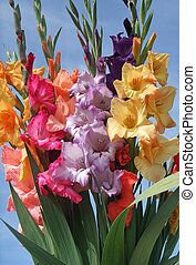 a sunny illuminated bunch of colorful gladioli flowers in front of blue sky