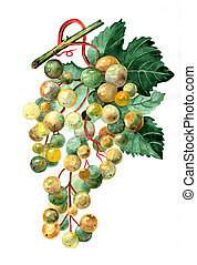 bunch of gold grapes