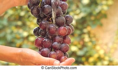 bunch of grapes close up