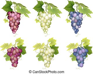 Bunch of grapes different varieties