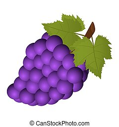 bunch of grapes on a white background