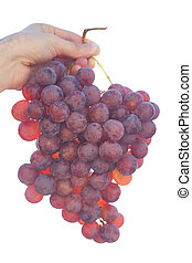 bunch of grapes on the sunny sky background