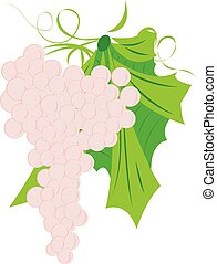 Bunch of grapes vector illustration on a white background