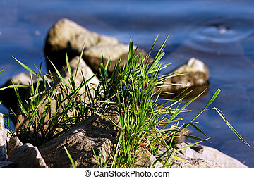 Bunch of grass at the water