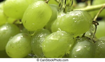 bunch of green grapes on a black background with water drops