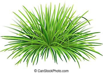 Bunch of green grass