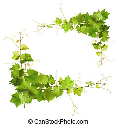 Bunch of green vine leaves and grapes vine - Collage of vine...